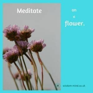 Learning meditation - meditate on a flower